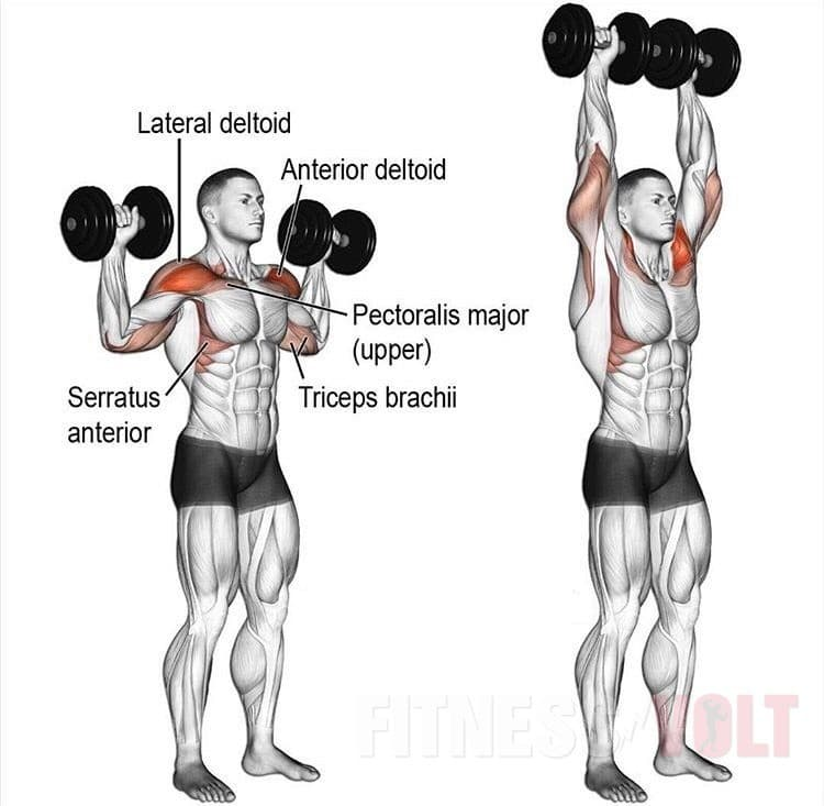 Your Ultimate Guide To Strong And Sculpted Shoulders – Fitness Volt ...