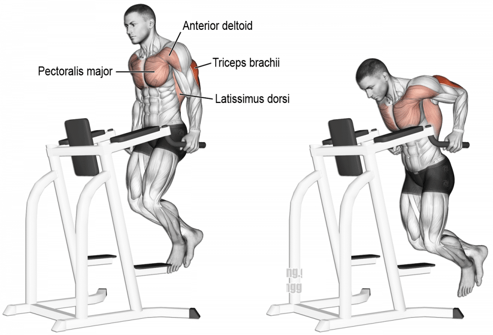 Dips Workout Triceps