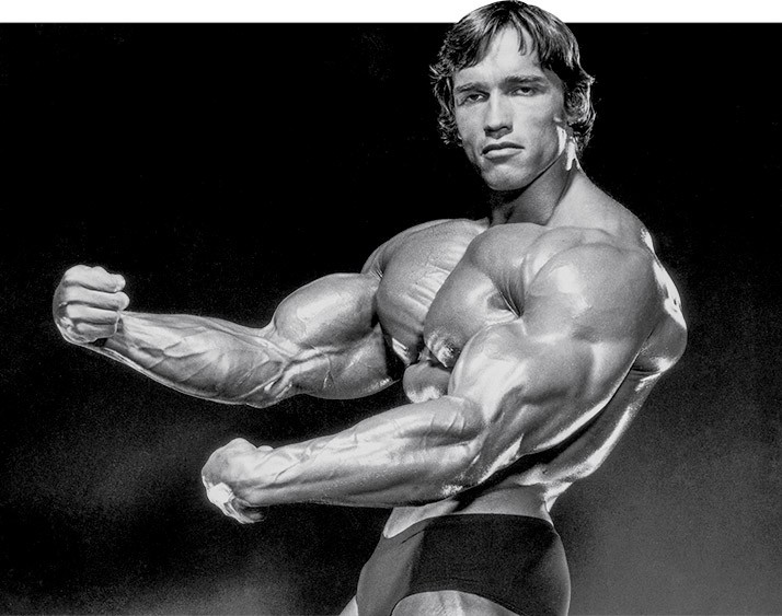 Arnold blueprint cut training fitness volt bodybuilding fitness arnold blueprint cut training high intensity bodybuilding workout malvernweather Image collections
