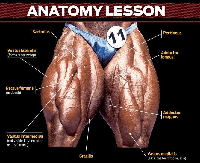 The anatomy of the Quads