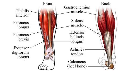 Leg Training 101 – Fitness Volt Bodybuilding & Fitness News