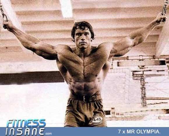 Arnold-Chest-Flies