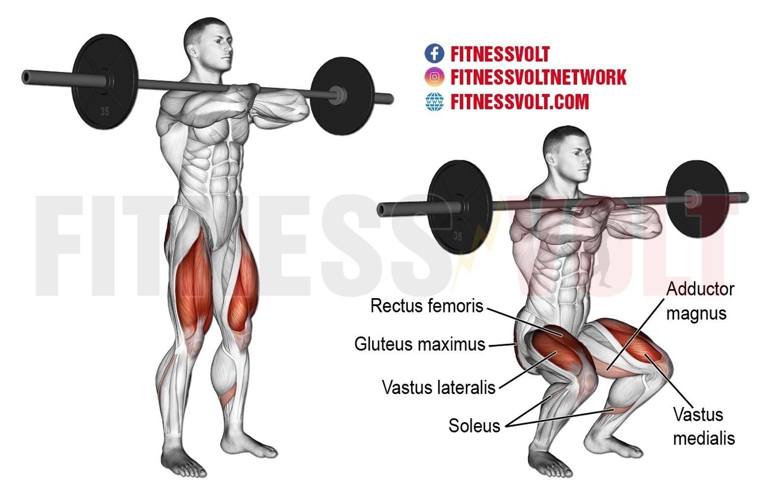Barbell Front Squat (Legs) – Fitness Volt