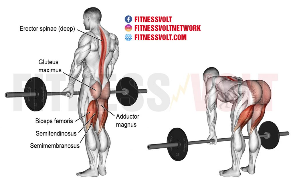 Barbell Straight Back Stiff Leg Deadlift (