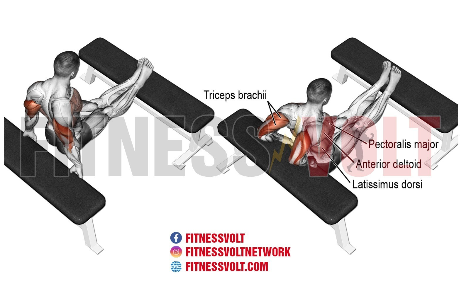 Cool Bench Dip Triceps Exercise Guides And Videos Fitness Volt Pdpeps Interior Chair Design Pdpepsorg
