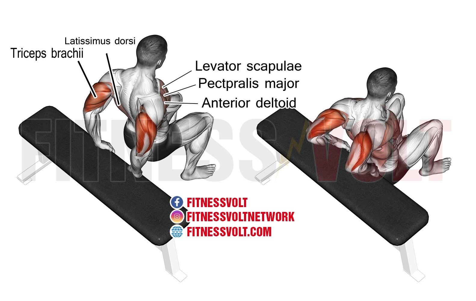 Bent Knee Bench Dip Triceps Exercise Guides And Videos