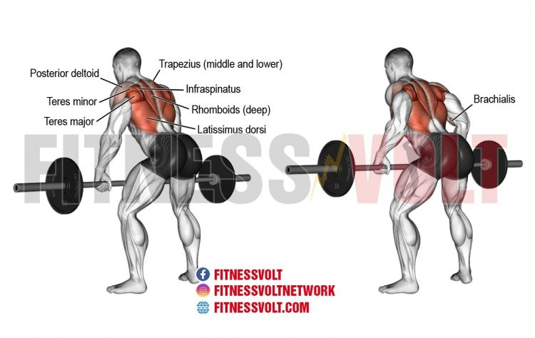 Bent-Over Barbell Row (Back)