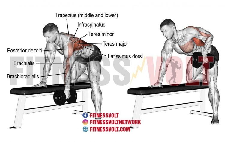 Bent-Over Dumbbell Row (Back)