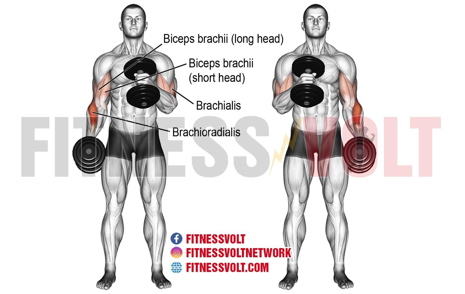 Dumbbell Cross-body Hammer Curl – Fitness Volt