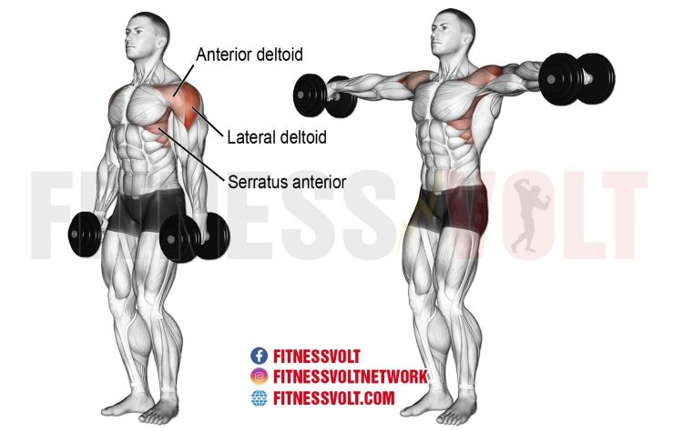Dumbbell Lateral Raise (Shoulders)