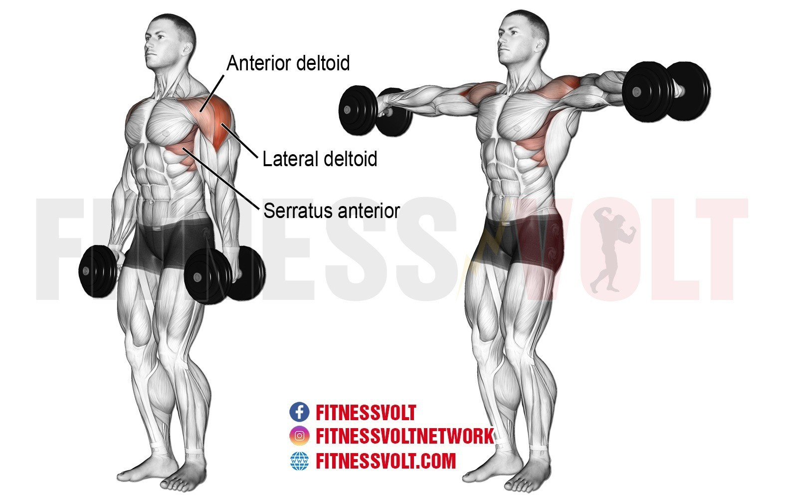 how to do dumbbell lateral raise