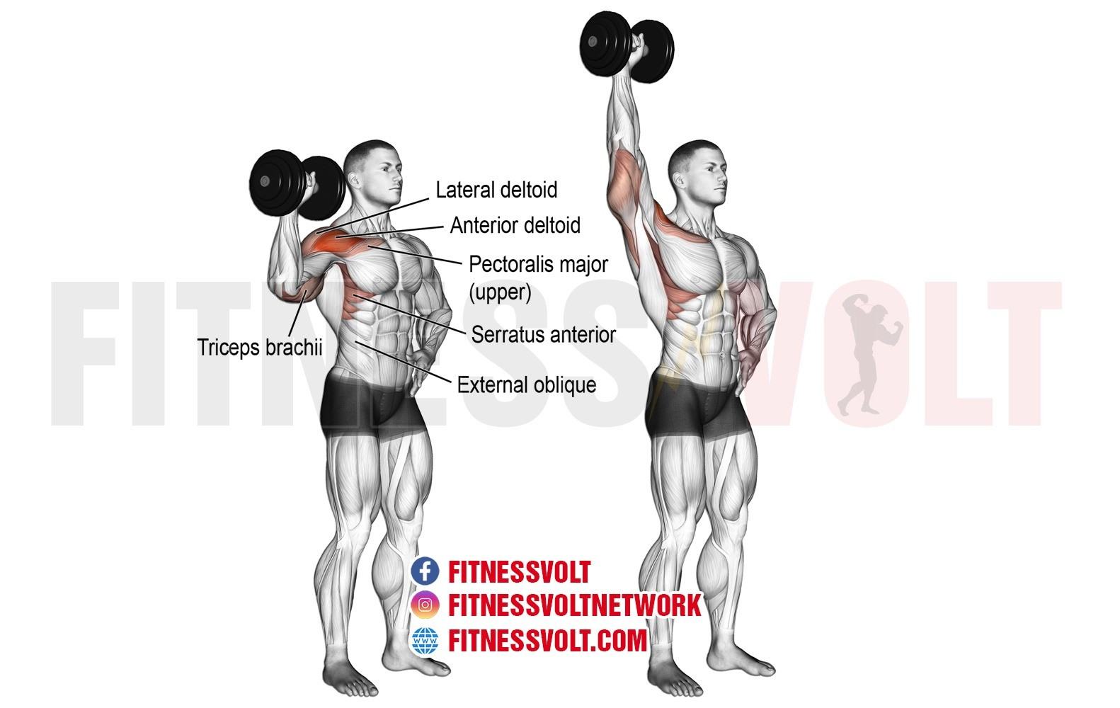 Dumbbell One-Arm Overhead Press (Shoulders) – Fitness Volt
