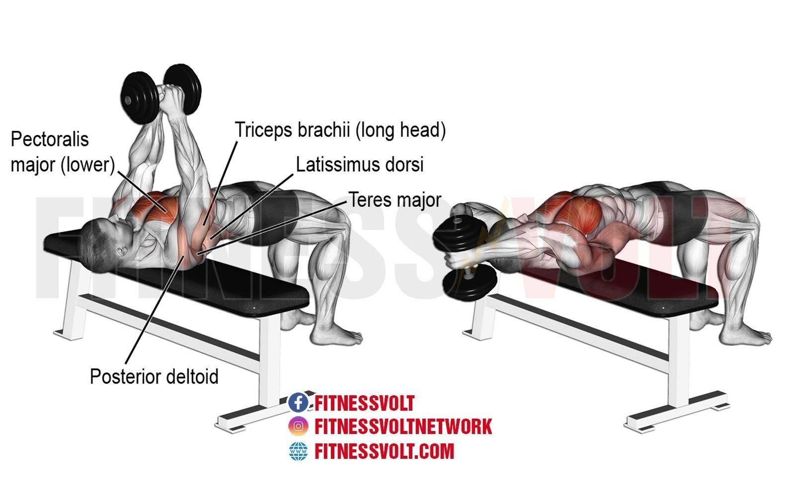 Dumbbell Pullover – Fitness Volt Bodybuilding & Fitness News