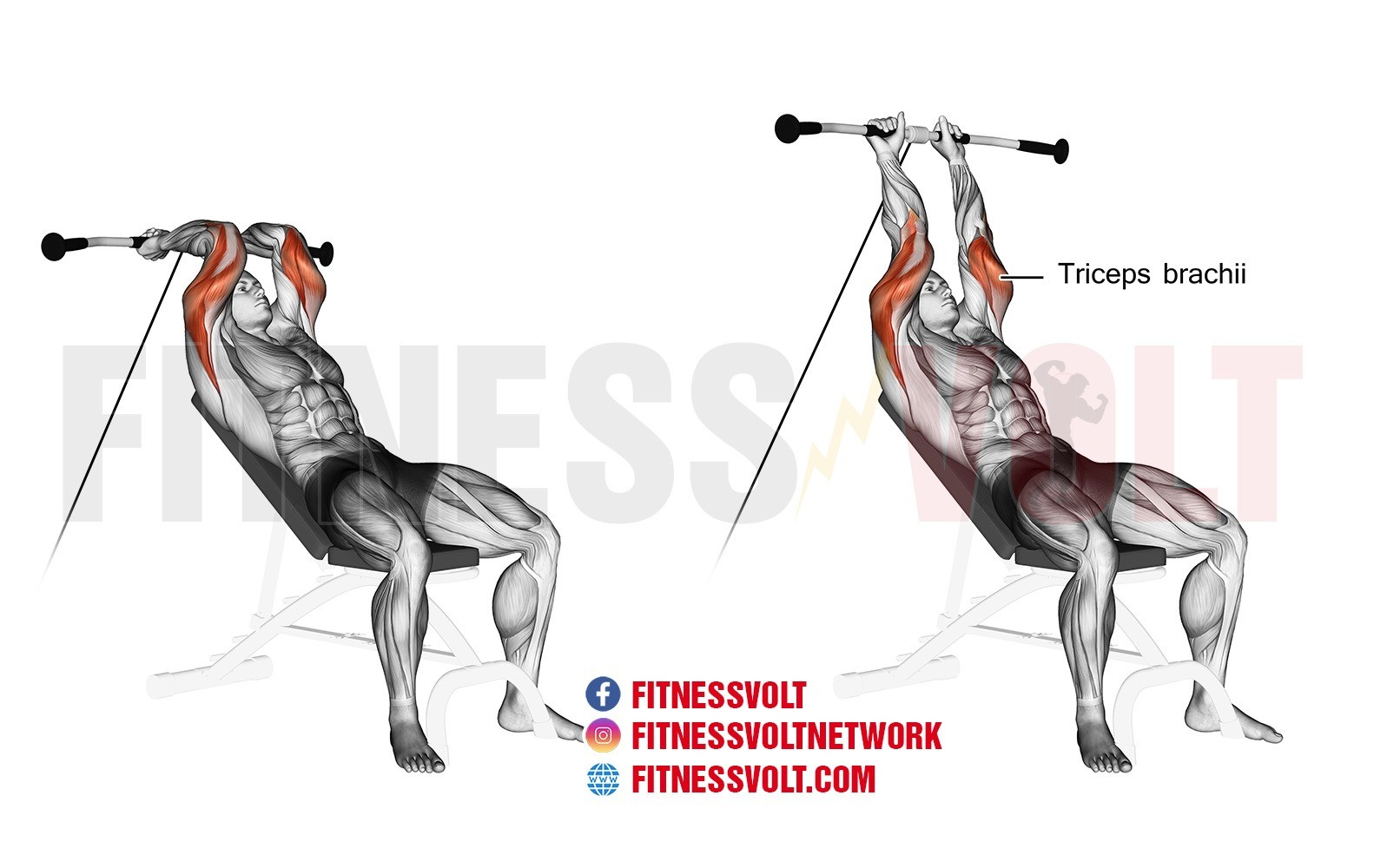 Incline Cable Tricep Extension (Triceps) – Fitness Volt