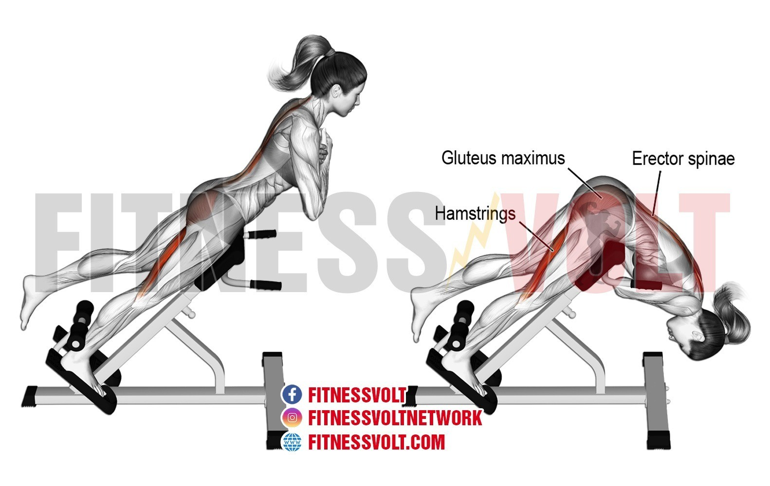One Leg Hyperextension Hamstrings Glutes Erector Spinae