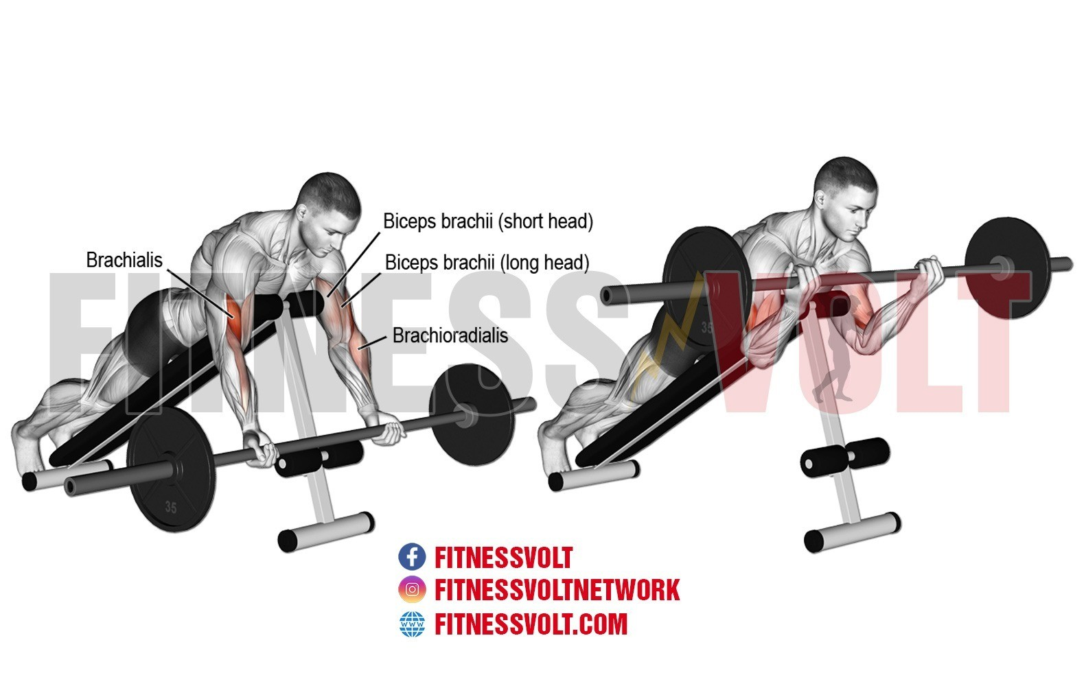 Prone Incline Barbell Curl Biceps Exercise Guides And Videos Fitness Volt