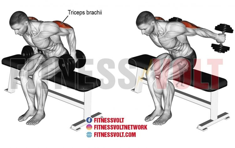 Seated dumbbell kickback