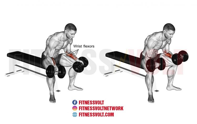 Seated Dumbbell Wrist Curl (Forearms) | Exercise Guides and Videos