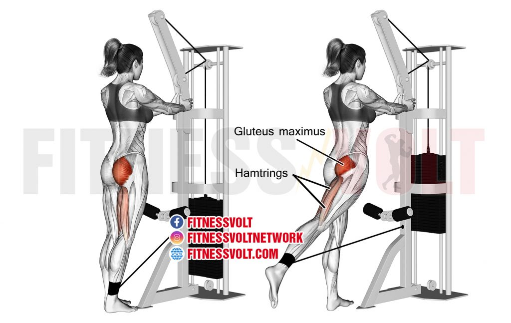 Standing cable hip extension