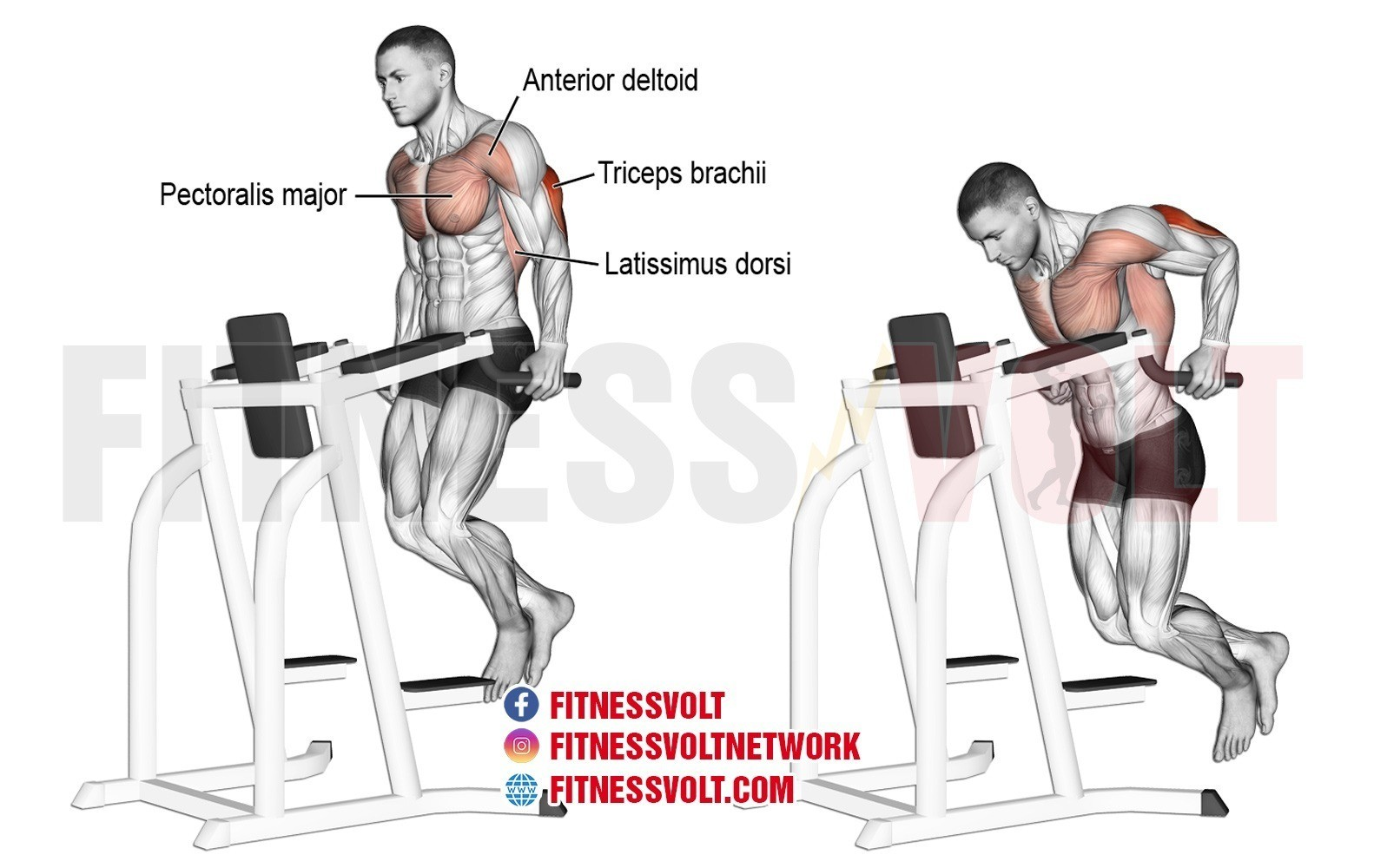 Tricep Dip Triceps Exercise Guides And Videos Fitness Volt