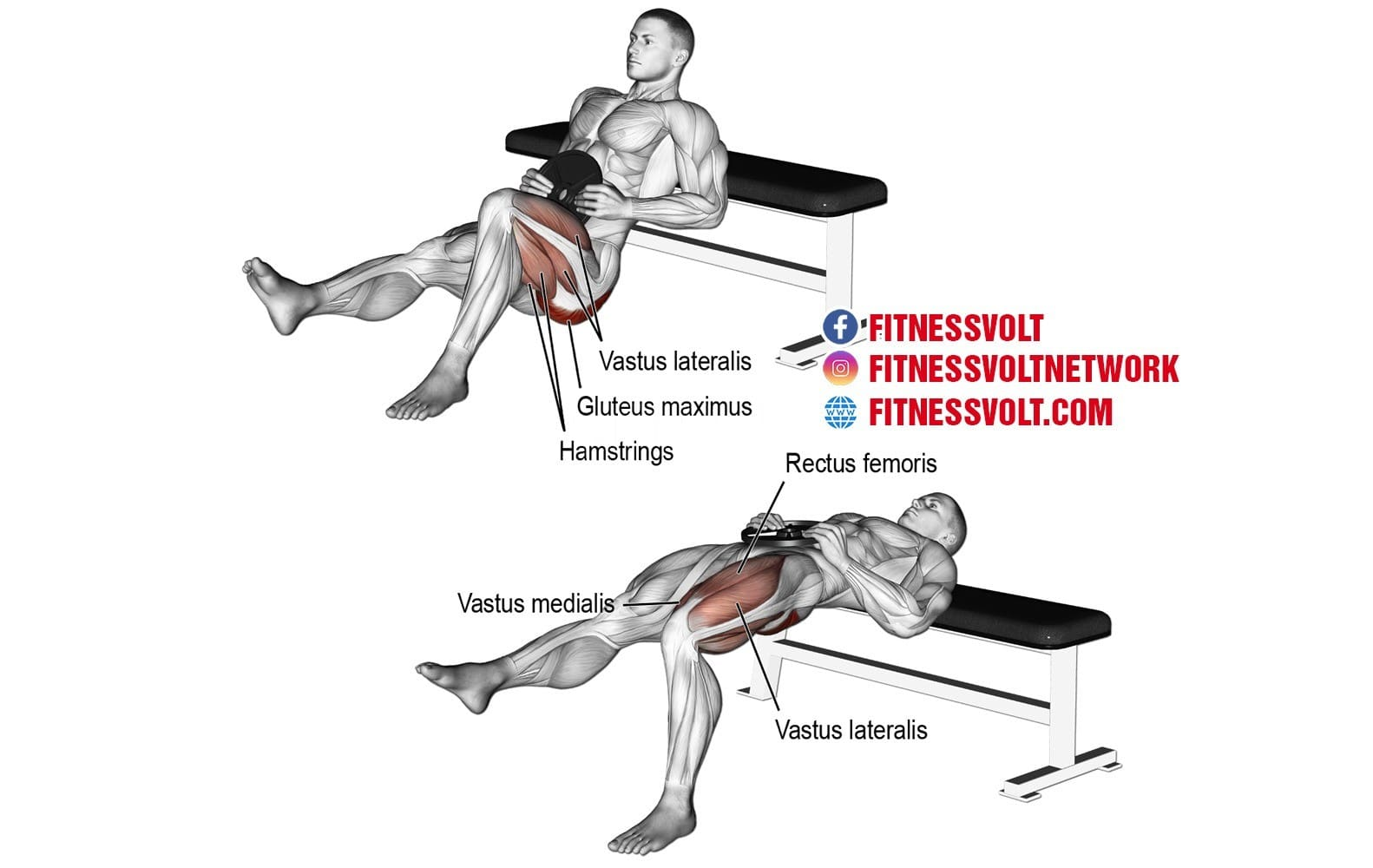 Weighted One-Leg Hip Thrust (Glutes) – Fitness Volt