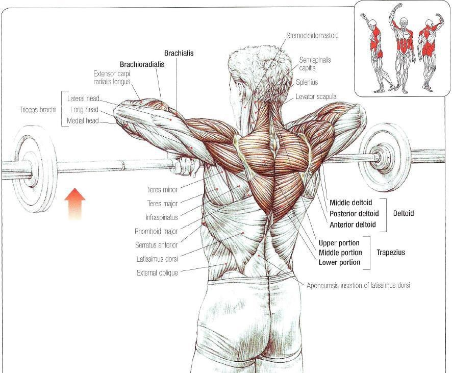 The Ultimate Guide To Upright Rows Benefits Muscles