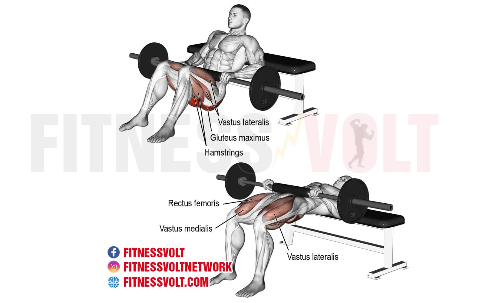 Barbell Hip Thrust (Glutes, Hamstrings) – Fitness Volt