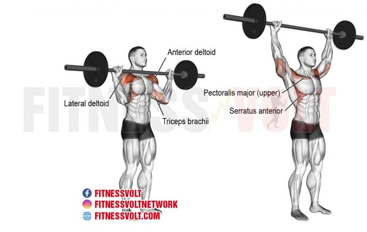 Best Barbell Workout At Home For Big Gains Fitness Volt