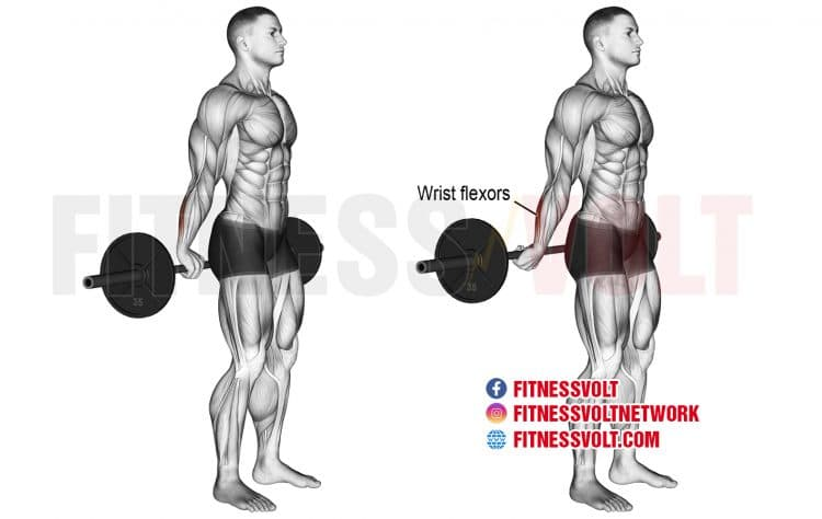 How To Do Behind-the-Back Barbell Wrist Curl (Forearms)