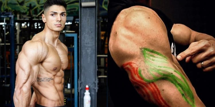 Building Big Triceps Fast