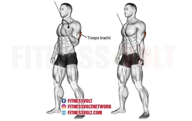 How To Do Cable One-Arm Reverse-Grip Tricep Push-Down (Triceps)