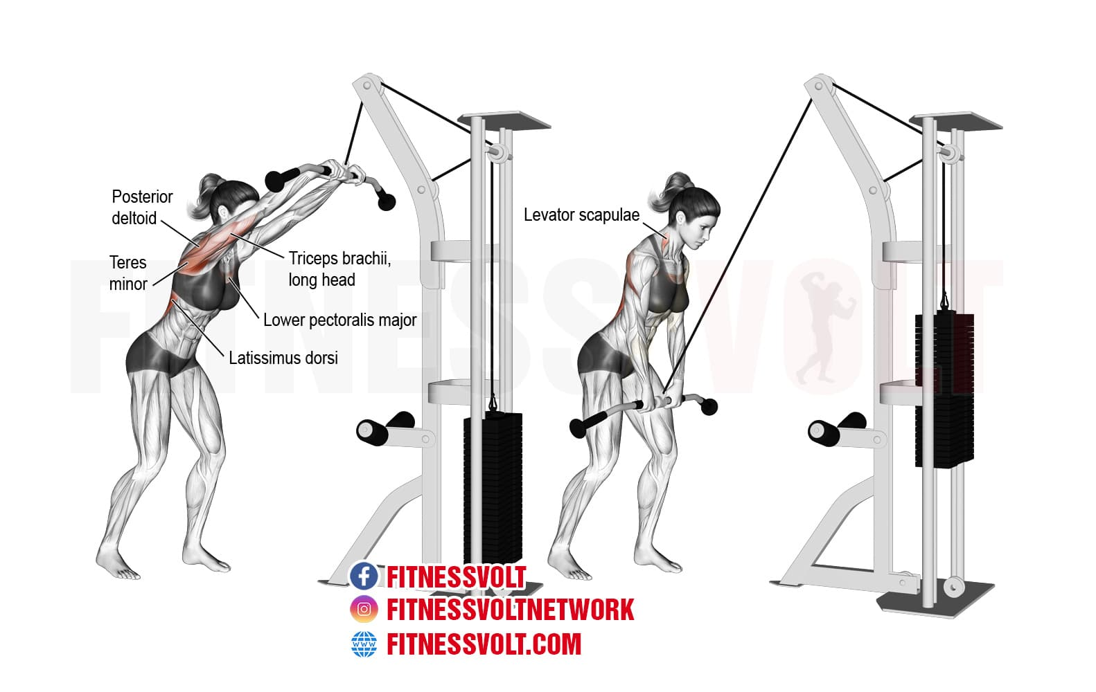 Cable Straight Arm Pull Down Lats Fitness Volt