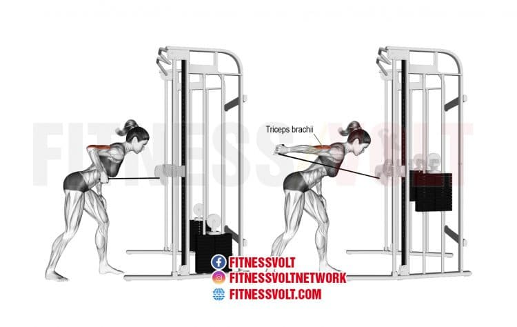 Cable Triceps Kickback