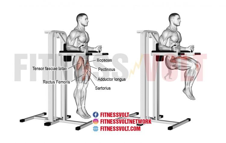 Captains Chair Workout Equipment | EOUA Blog