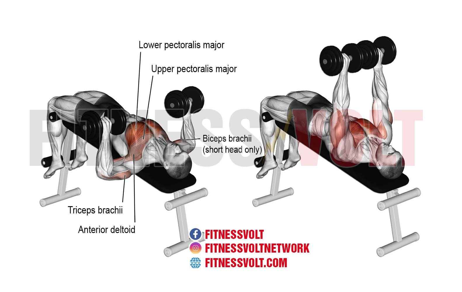 Decline Dumbbell Bench Press Chest Fitness Volt