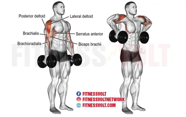 Dumbbell Armpit Row