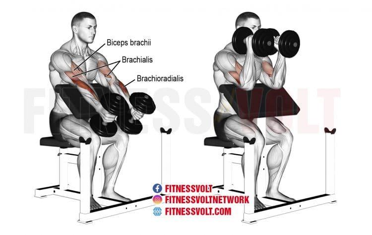 How To Do Dumbbell Hammer Preacher Curl (Brachioradialis, Brachialis, Biceps)
