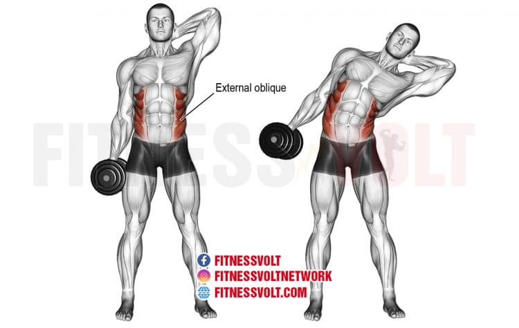 Dumbbell Side Bend (Obliques)