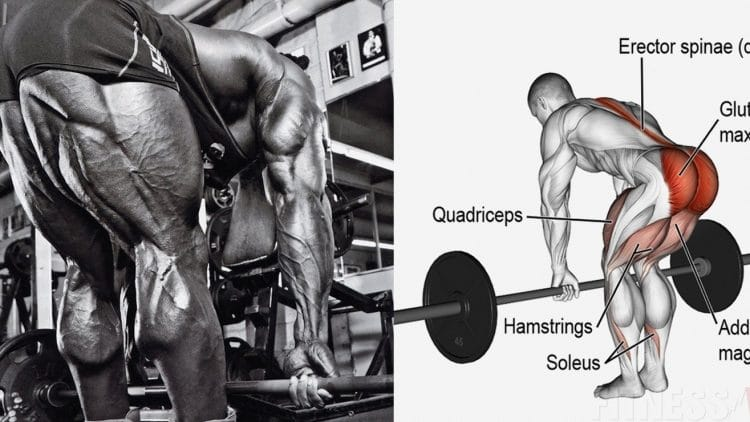 Hamstring Exercise