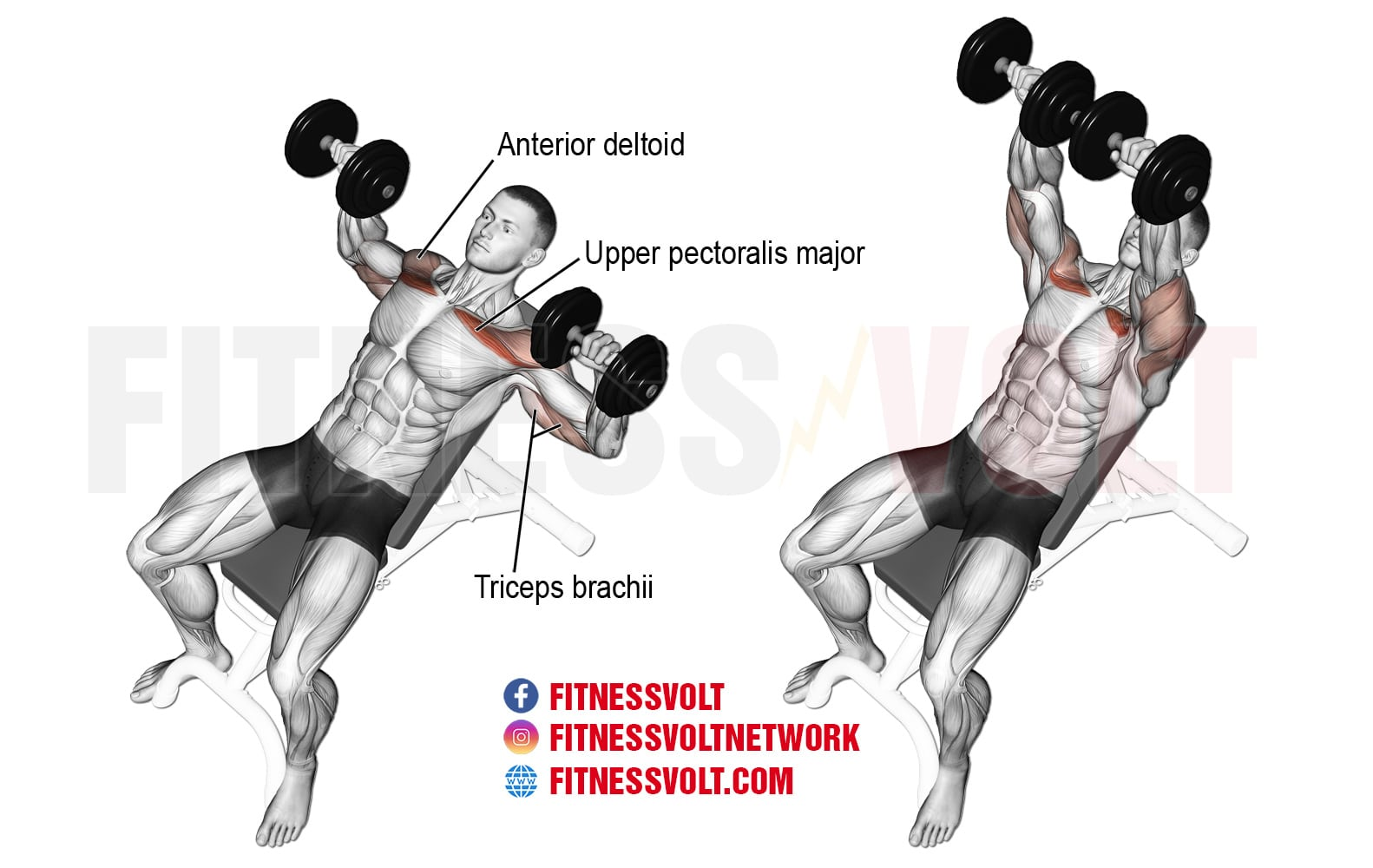Incline Dumbbell Bench Press Chest Fitness Volt