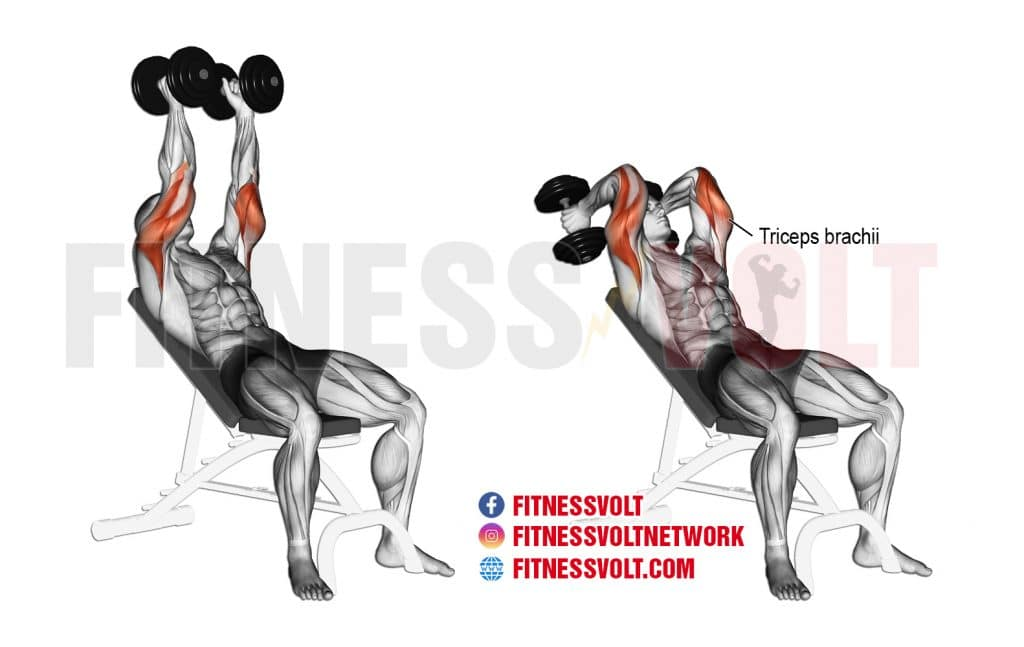 Incline Dumbbell Extension