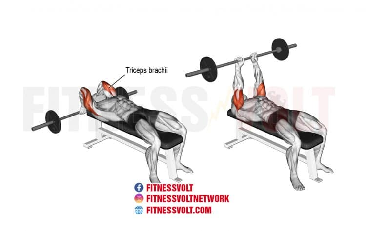 How To Do Lying Barbell Tricep Extension (Triceps)