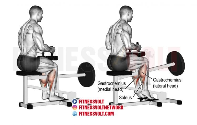 How To Do Machine Seated Calf Raise (Calves)