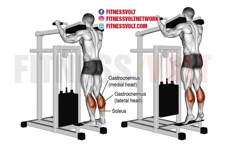 Machine Standing Calf Raise (Calves)