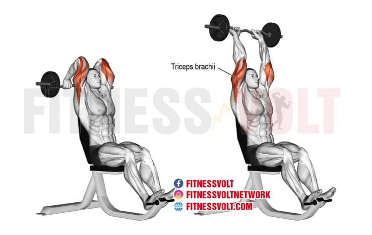 How To Do Overhead EZ Bar Tricep Extension (Triceps)
