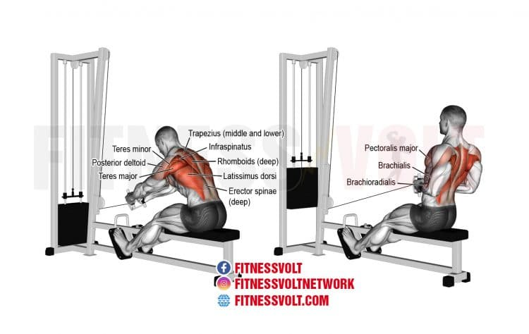 How To Do Seated Cable Row (Back)