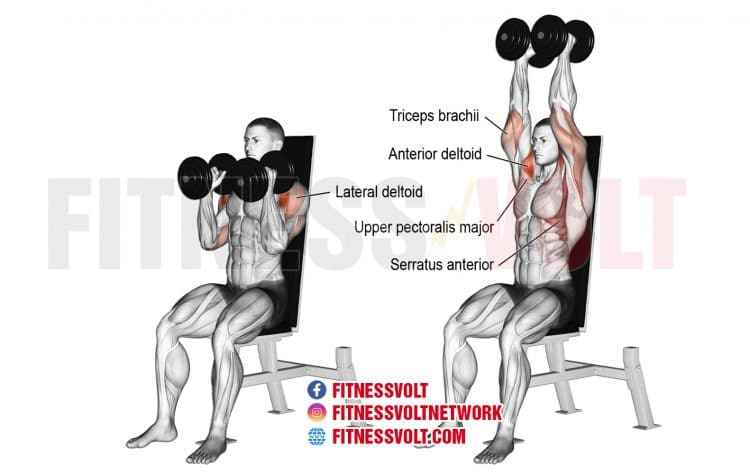 Seated Neutral-Grip Dumbbell Overhead Press (Shoulders ...
