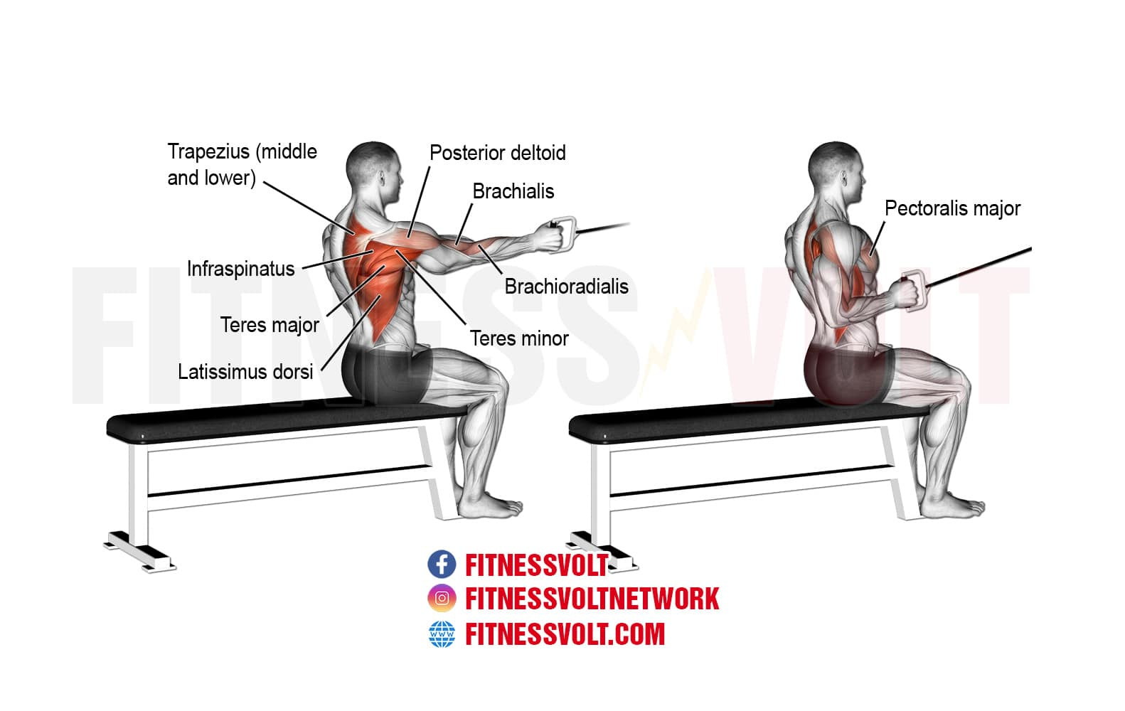 Seated One-Arm Cable Row