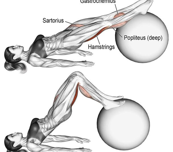 Stability Ball Hamstring Curl Muscles