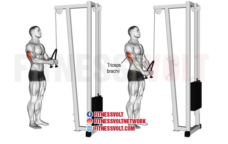 Tricep Rope Pushdown (Triceps) – Fitness Volt